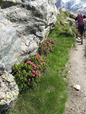 Des fleurs le long du chemin