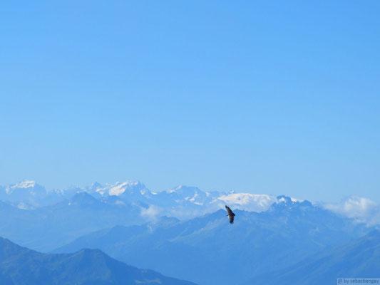 Face au Mt Blanc (Aravis)