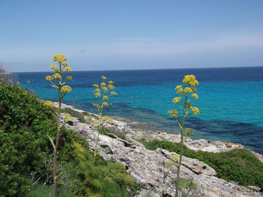 Paysage Corse dans le désert des Agriates