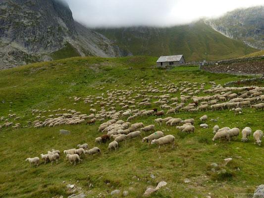 Que de moutons