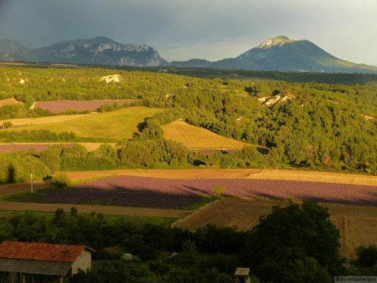 Paysage du plateau de Valensole
