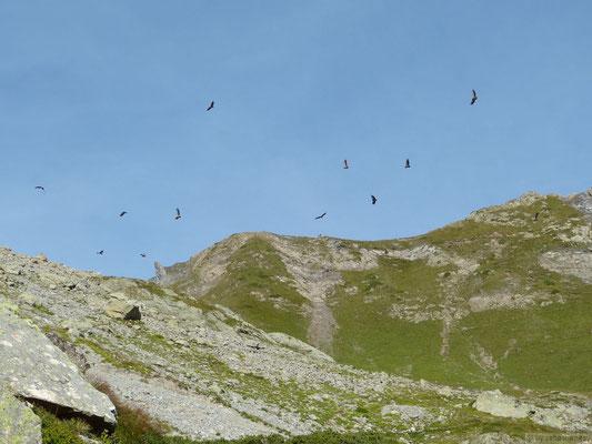 Groupes de vautours fauves (Oisan)