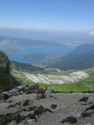 En descendant, le lac d'Annecy et les Bouquetins