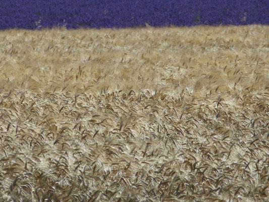 2 couleurs (Plateau de Valensole)