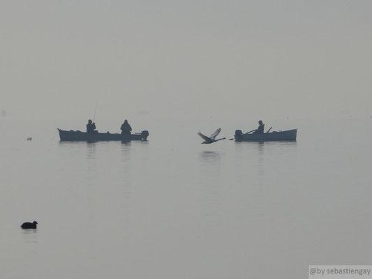 Vol de c'un Cygne entre les pêcheurs (lac d'Annecy)