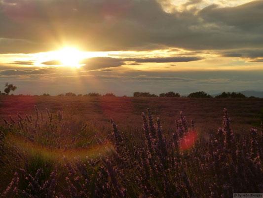 Coucher de soleil sur les champs de lavandes (Puimoisson-Gorges du Verdon)