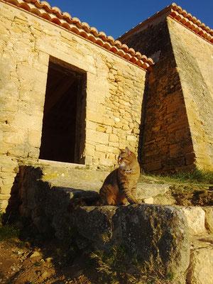 Câline, au soleil couchant,  devant la chapelle