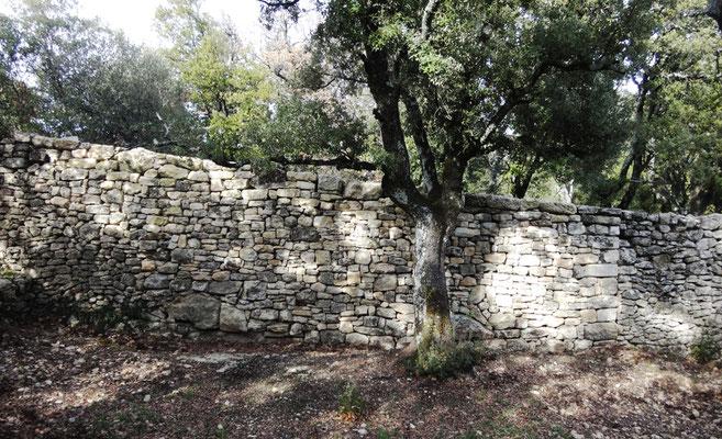 Vue depuis l'intérieur (clôture communauté). Intervention achevée