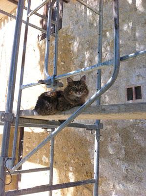 """Câline, le """"chat de chantier"""" de Luberon Patrimoine se prélasse sur les échafaudages"""