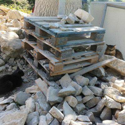 """Câline, le """"chat de chantier"""" Luberon Patrimoine est pris en embuscade par le chat du voisin. Elle se cache derrière le poste à découpe"""