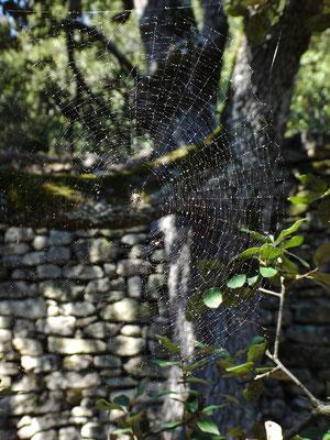 Une araignée tisse sa toile près du mur
