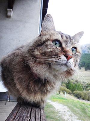 Câline, le chat de chantier de Luberon Patrimoine scrute les marmottes !
