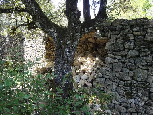 Mur de clôture, vu de l'intérieur,  à l'ouverture du chantier. Les lois de la gravité étant universelles,  le couronnement ne tient que par le fait d'avoir été cimenté sous forme de casquette