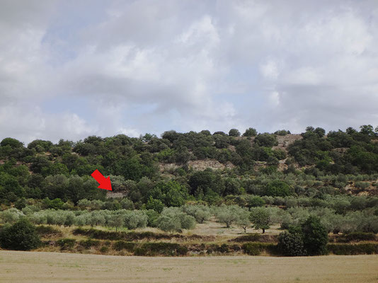 Vue de la section depuis la D 12 - route de Saint-Pons à Ganagobie