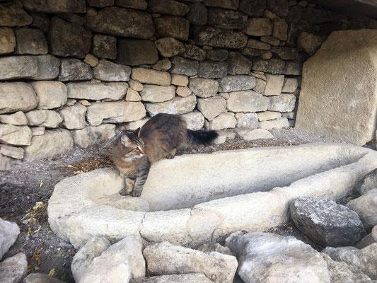 """La voici sur l'une des tombes découvertes lors des fouilles du parvis. Il s'agit du sarcophage n°31 qui a été découvert tout proche de cet emplacement (le parvis de l'église faisait office de cimetière). Cette tombe a """"accueilli"""" plusieurs squelettes."""