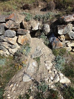 Il est impressionnant de voir les dégâts que les marmottes infligent aux murs en pierre sèche encore debout !