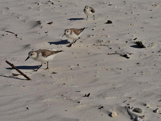 San Carlos Bady Beach • Fort Myers • Florida • Foto yak © 2018 RK