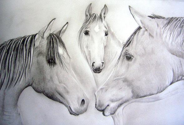 Pferde in Bleistift