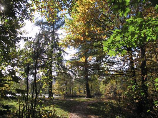 Ни один из путей в Архангельское не минует леса