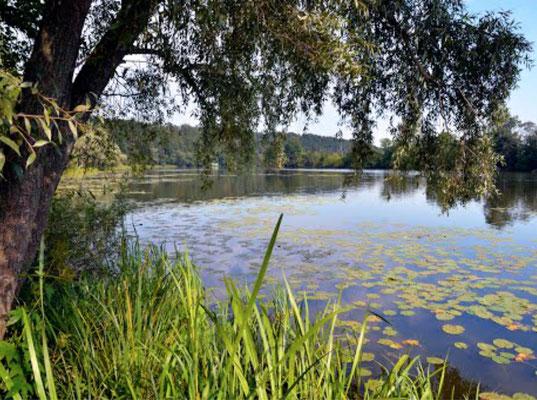 Усадьба Архангельское.Москва река.