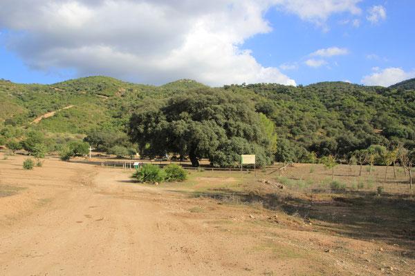 Standplatz alte Eiche bei Coripe