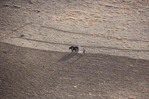 Ackerbau mit Esel, Tassaouttal