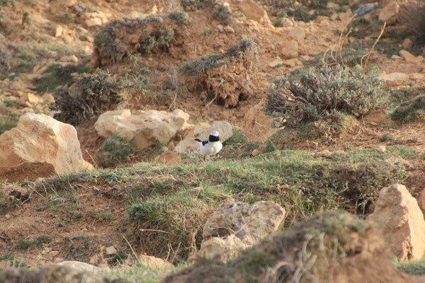 Vogel Nähe Standplatz See bei Izhir