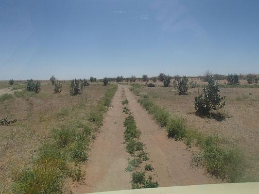grüne Wüste erg Cheggaga