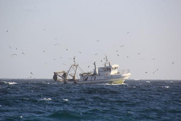 Fischer auf dem Heimweg