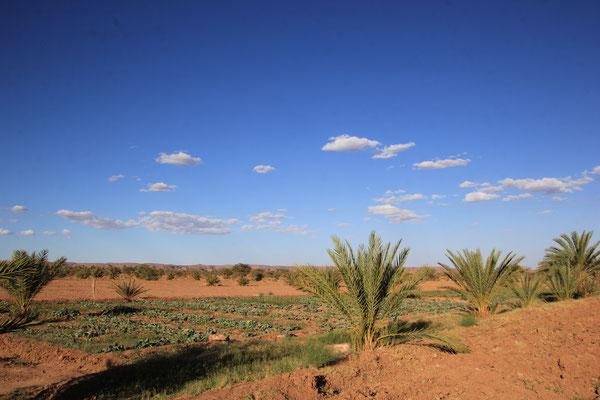 Bewässertes Feld wird grüner