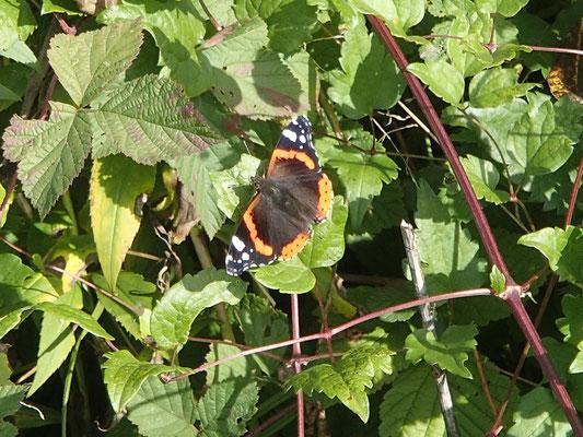 Herbstlicher Schmetterling