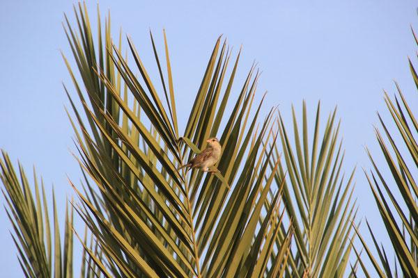 Vögelchen in Palme