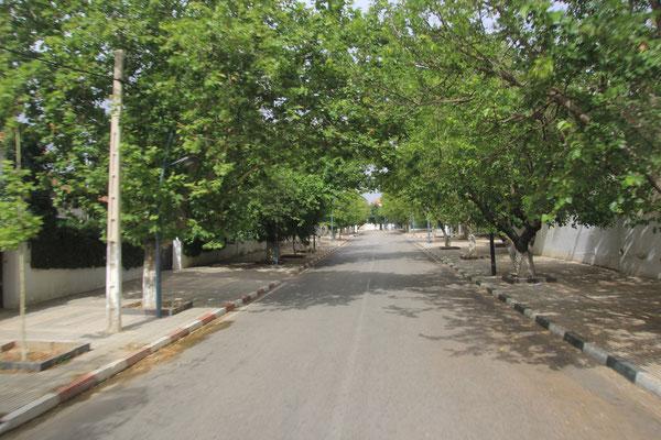 grünes Azrou