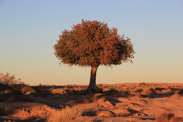 Baum, Talsinntrunde