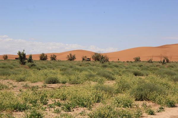 so grün vor dem Sand