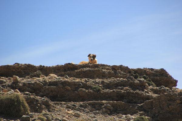 Hirtenhund Schlucht Jaffer