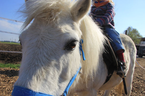 Oskar das Pony