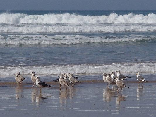 die Vögel und das Meer, terre de ocean