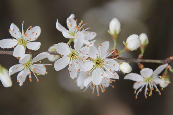 Frühjahrsspaziergang