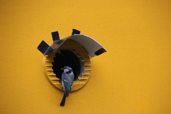 Nest mit Vordach