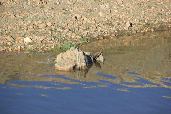 Schildkröte am Standplatz Embalse de Cijara