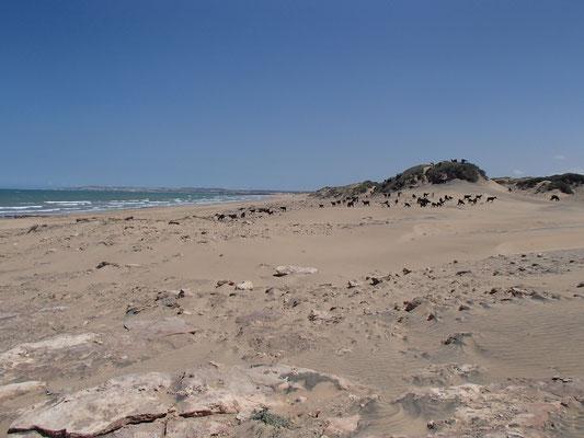 Strand Nähe Sidi Kauki