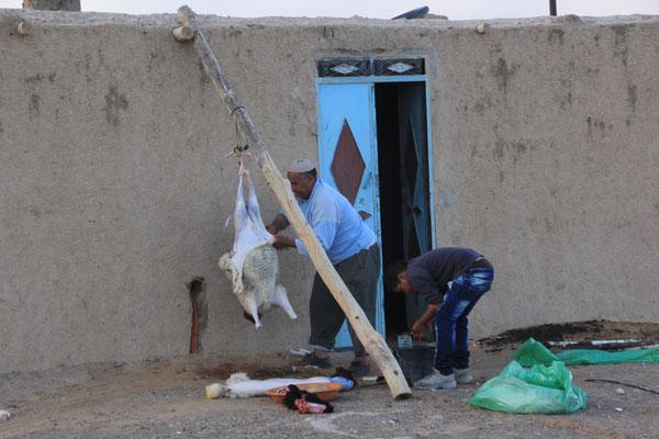 Schafsmetzger bei der Arbeit Etoile de dune