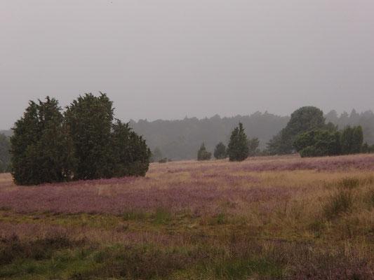 Lündeburger Heide