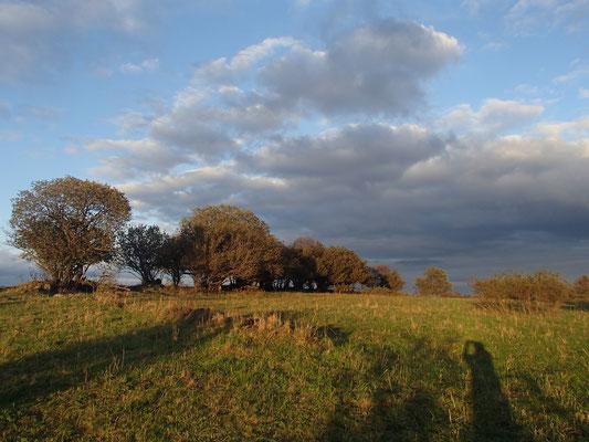 Abendlicht Nähe Grenzanlage-Schwarzes Moor