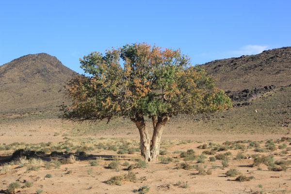 Baum im Geröll