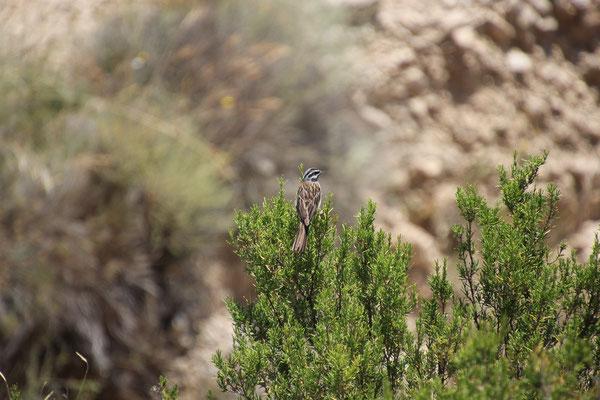 Vogel am Wegesrand