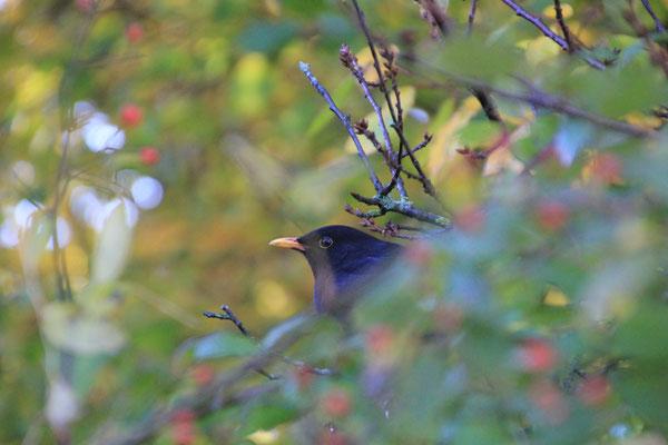 Herbst Vogel Stimmung