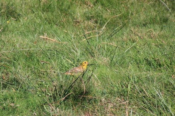 Oberpfälzer Gelbvogel, Zugvogeltreffen