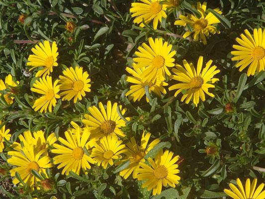 Blumengruß von Capo di Gata